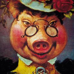 Cochon-à-lunettes