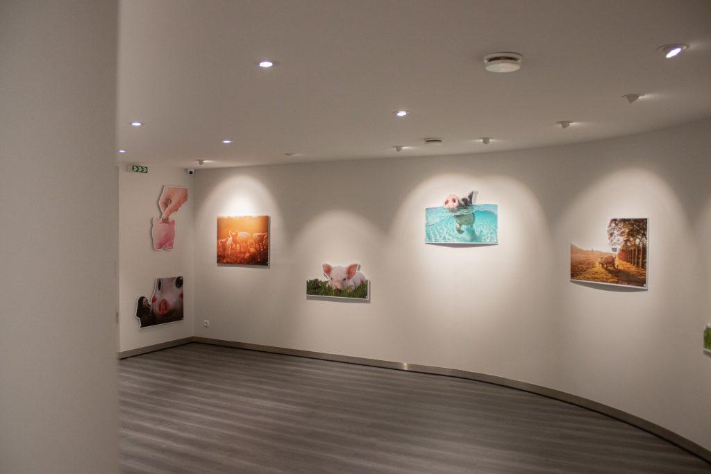 espace muséographique maison du jambon debayonne